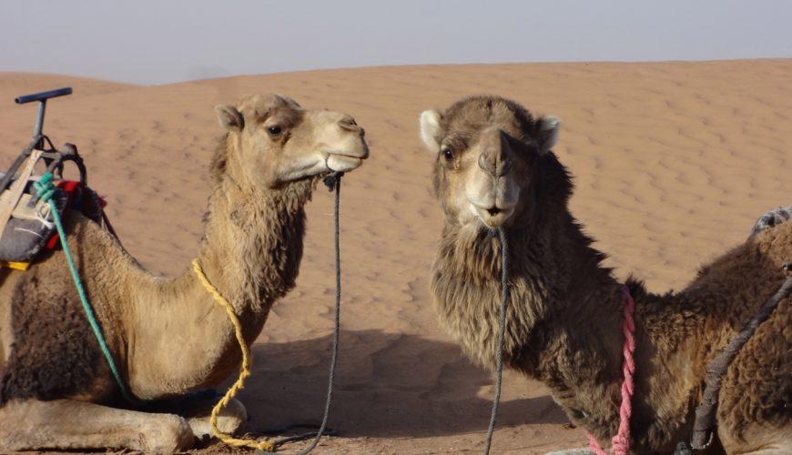 3 Days Camel Trekking To The Sahara Desert
