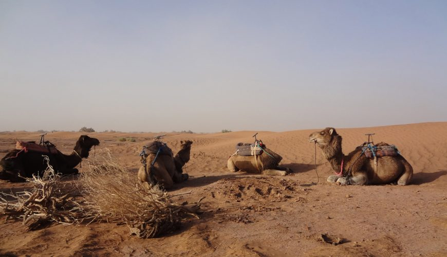 4 Days Camel Trekking To Erg Chigaga Dunes