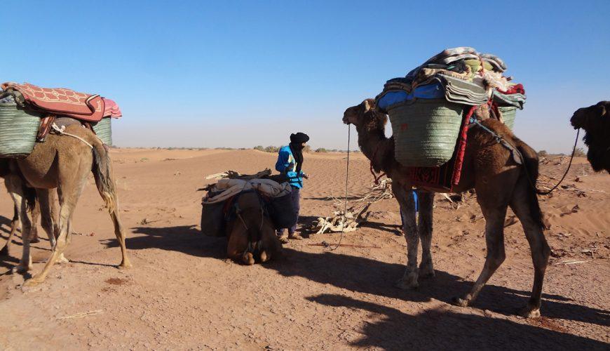 6 Days Camel Trekking To Mezouaria Dunes
