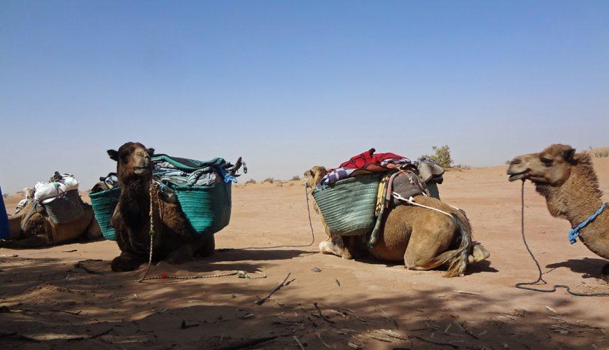 7 Days Camel Trekking To Erg Smar Dunes