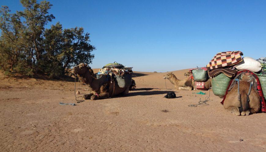8 Days Desert Trekking To Chigaga and Chebbi