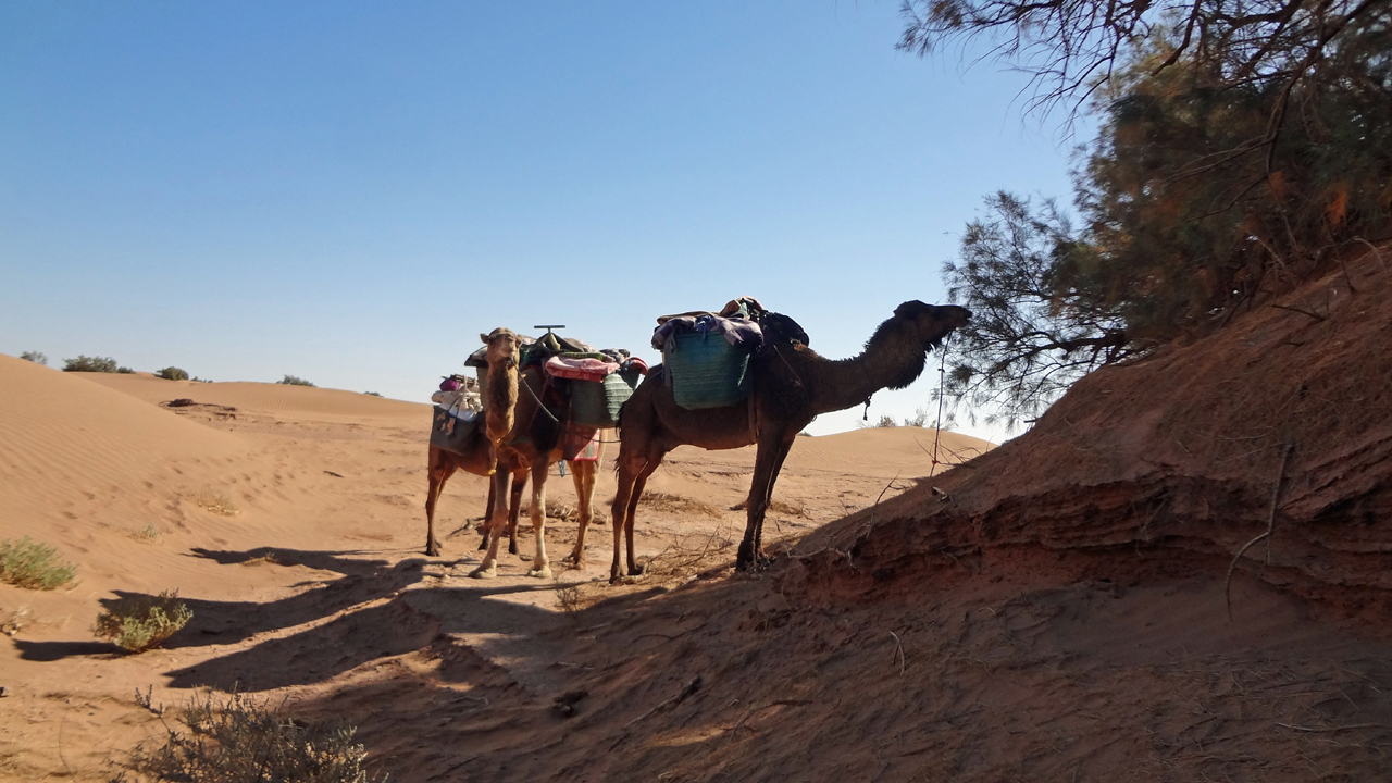 Day 1: From Mhamid To Oued Naam