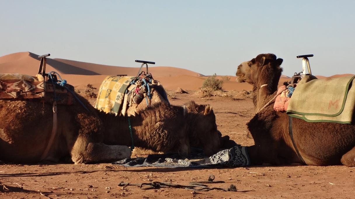 Day 6 : From Mezouria Dunes To Mhamid